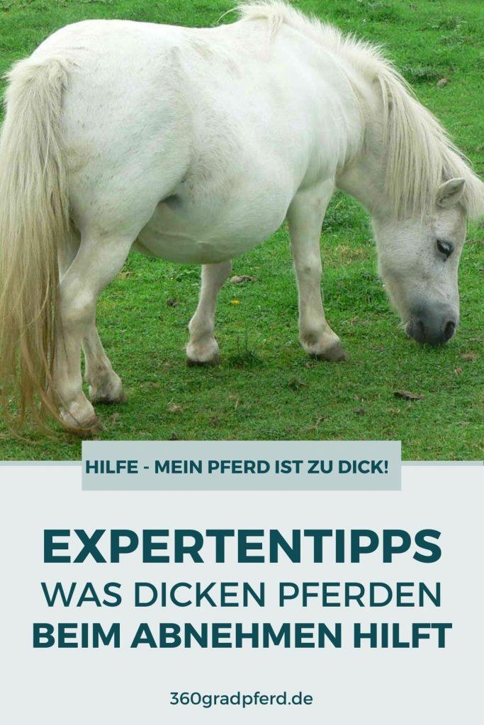 Was hilft Pferden beim Abnehmen und woran erkenne ich dass mein Pferd zu dick