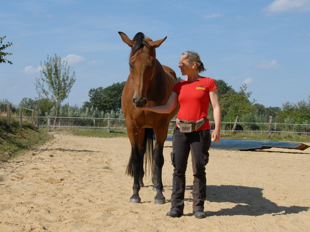 Wichtig ist die exakte Futterposition: mittig und gerade vor der Brust des Pferdes
