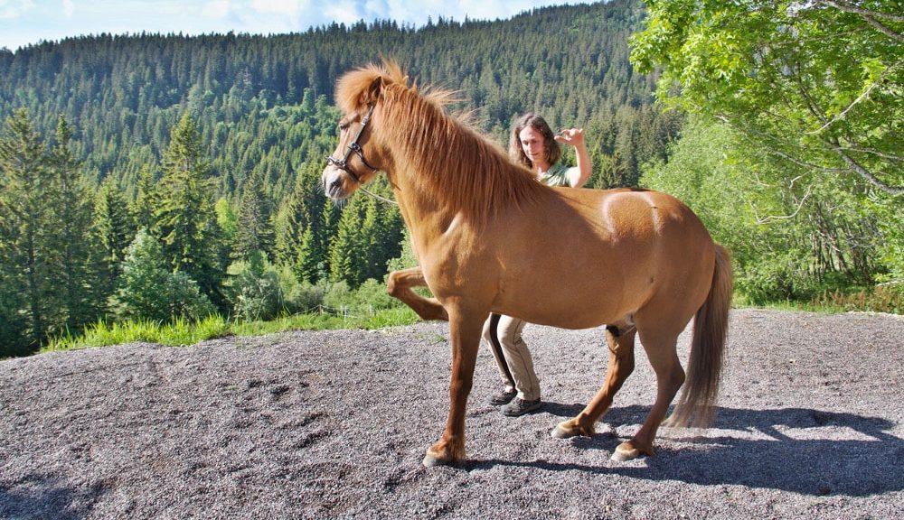 Anja Rut Hebel beim Intrinzentraining mit ihrem Pferd