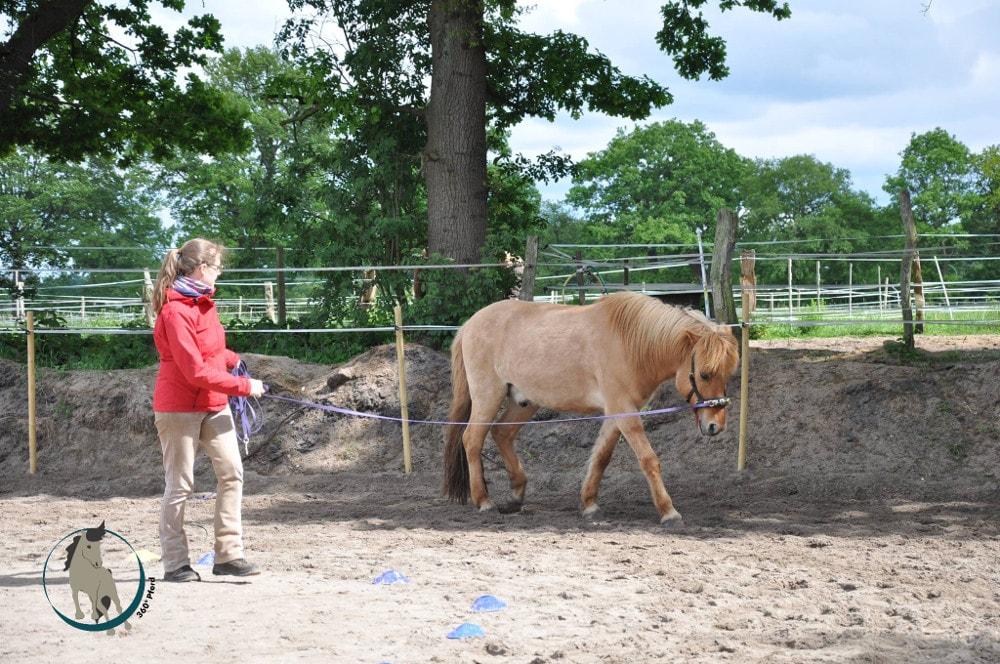 Longieren und Bodenarbeit mit Pferd hilft beim Muskelaufbau