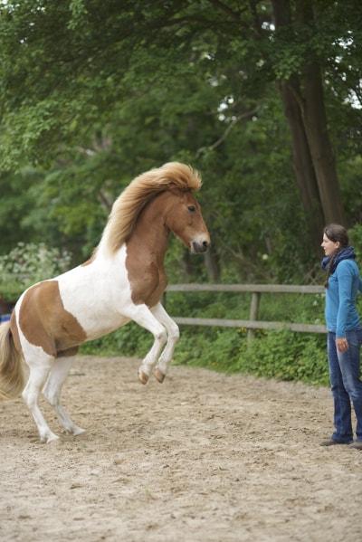 Intrinzentraining mit Pferd