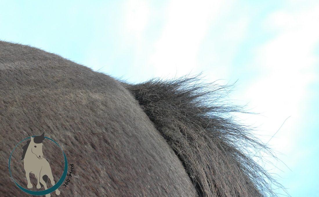 Pferd im Fellwechesl