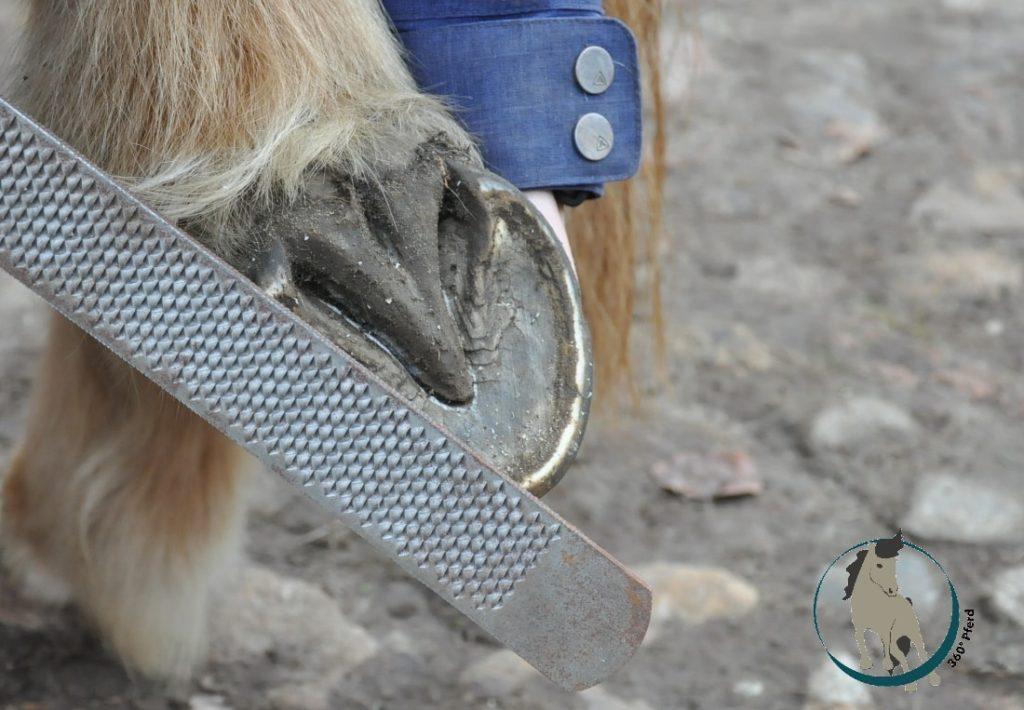 Wenn das Pferd beim Hufe geben und Hufe raspeln ein Problem hat, dann ist das meist keine Frage der Erziehung