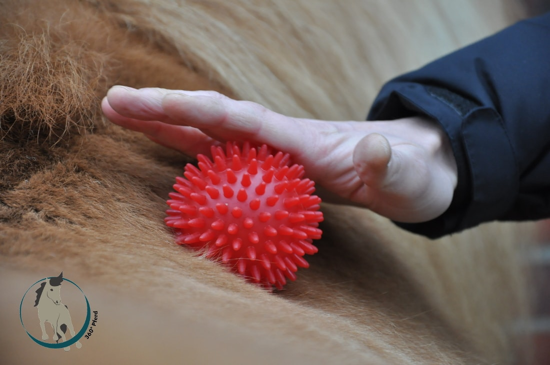 Der Igelball setzt diffuse Reize und stimuliert so das taktile System des Pferdes