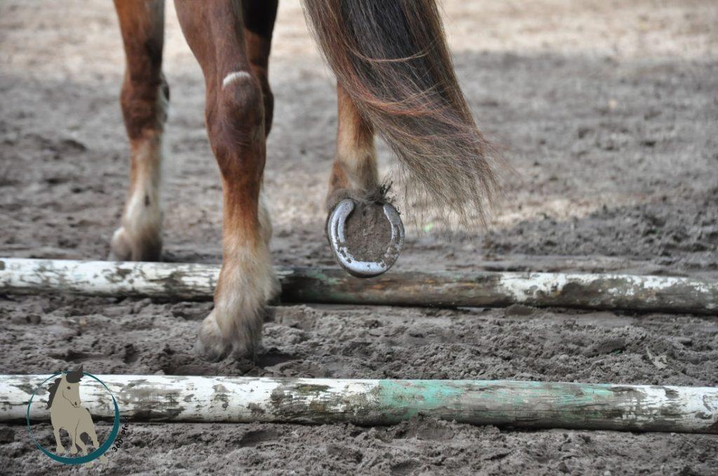 Stangentraining mit Pferd