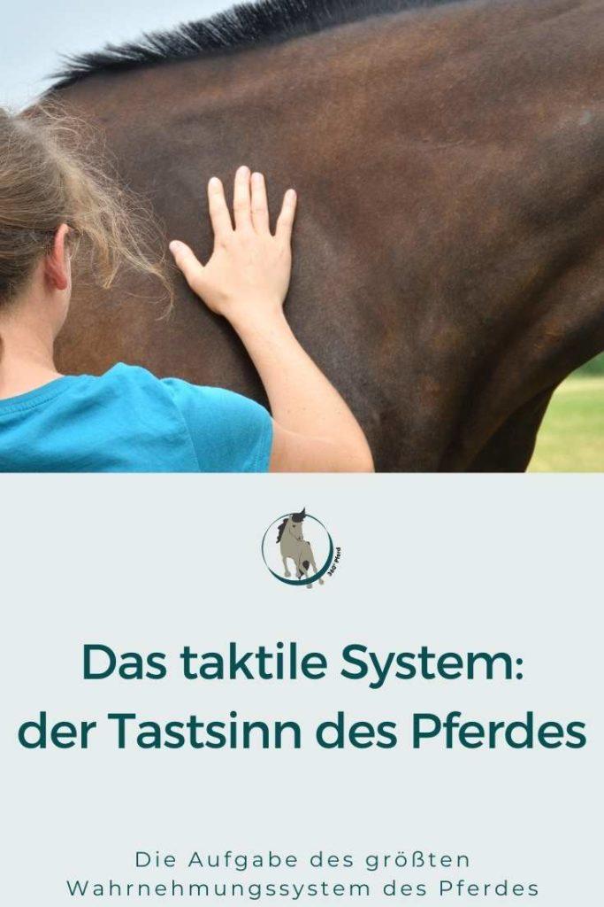 Das taktile System des Pferdes der Tastsinn
