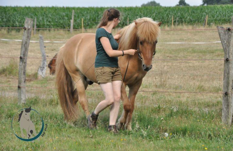 Pferd mit gutem Körpergefühl bei der Handzügelarbeit