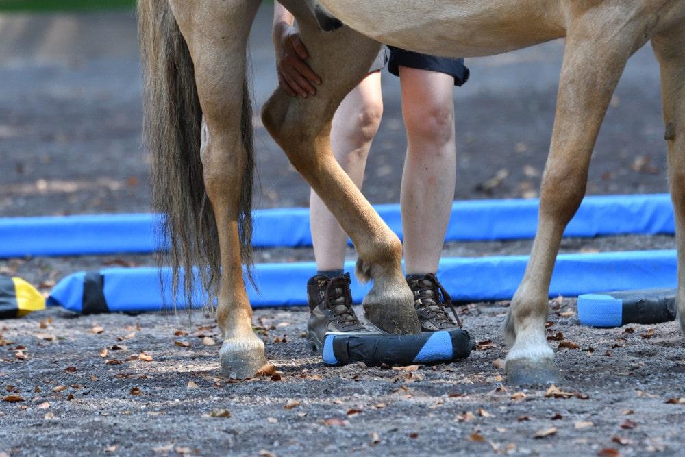 Balance Pads für Pferde