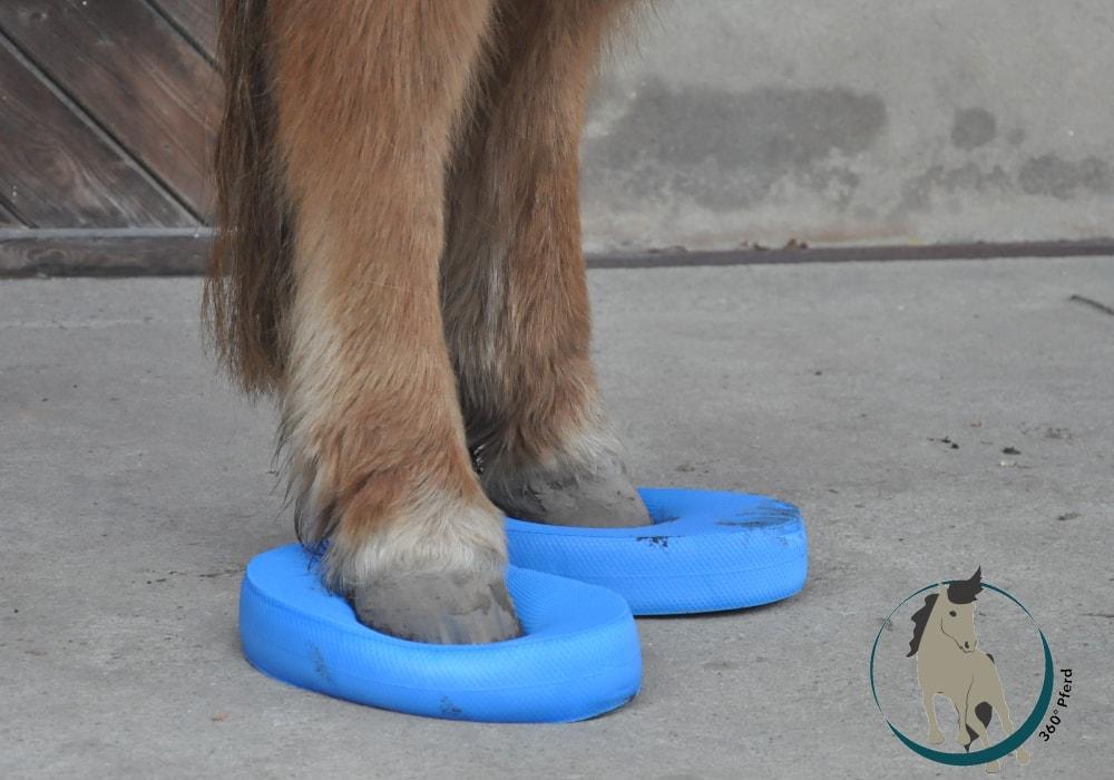 Pferdetraining mit Balance Pads zur Verbesserung der Körperwahrnehmung