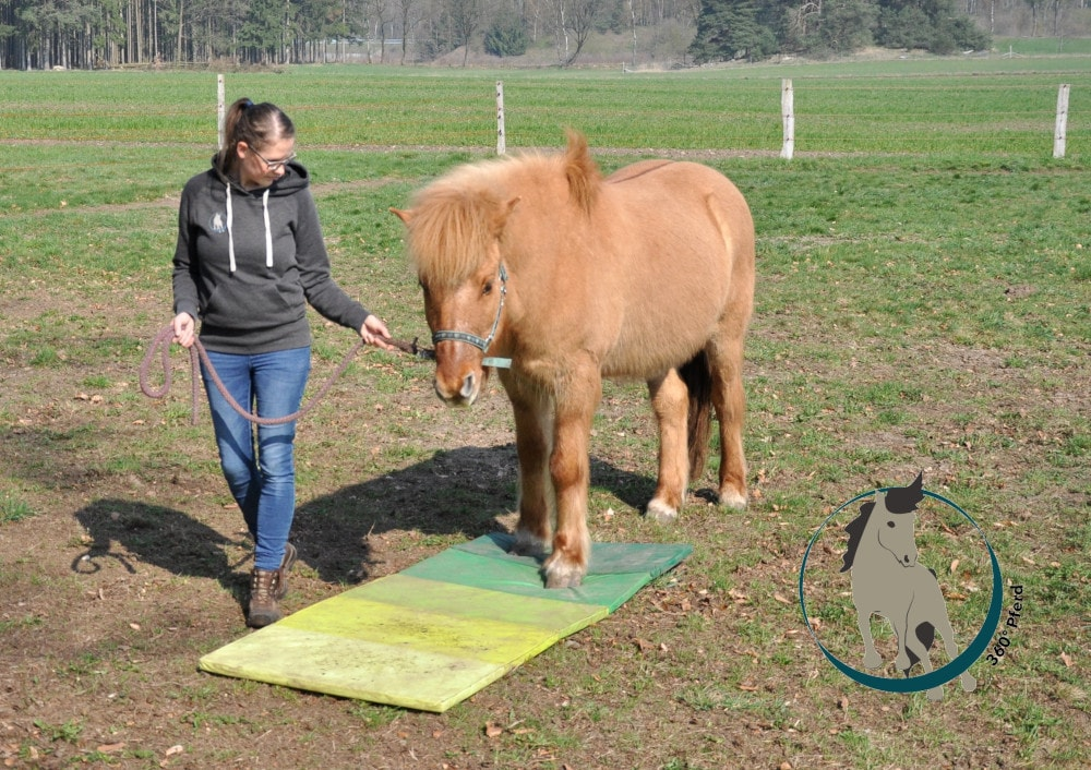 Das propriozeptive System beim Pferd lässt sich unter anderem mit verschiedenen instabilen Untergründen fördern