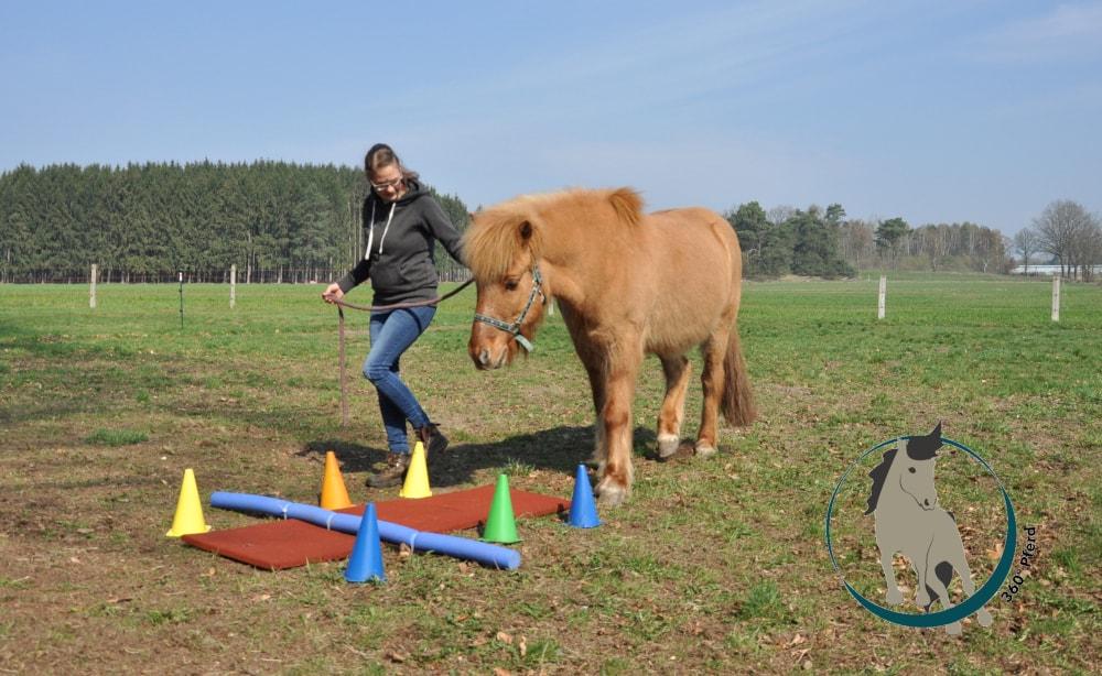 Propriozeptives Pferdetraining mit Stangen und instabilen Untergründen