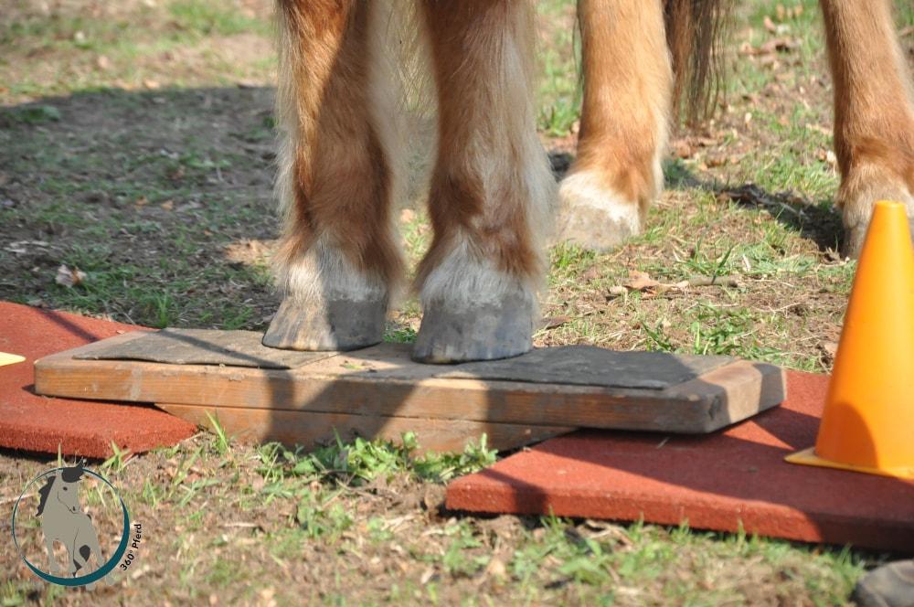 Durch das Unterlagern und Stabilisieren der Zweibeinwippe kann das Pferd an das Wippentraining herangeführt