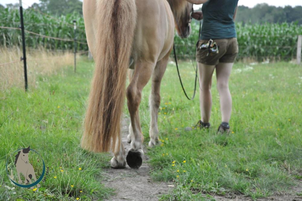 Pferd von hinten betrachtet im Schulterherein vom Boden aus - man erkennt drei Hufschläge