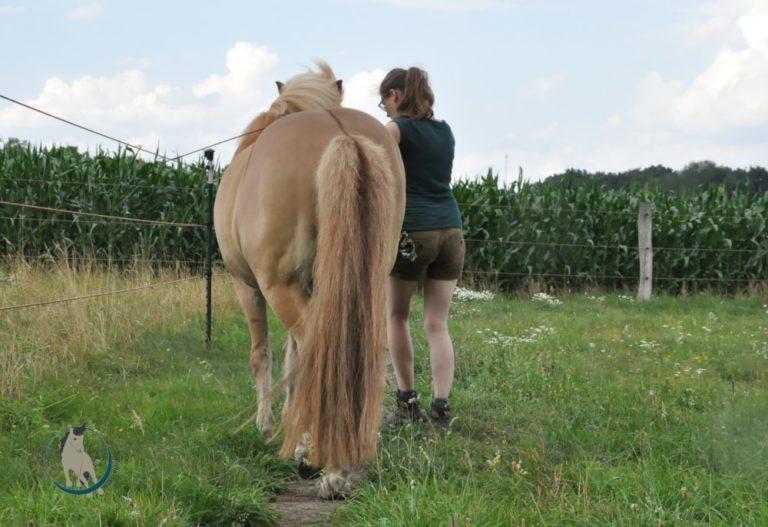 Pferd von hinten im Travers an der Hand