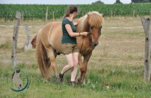 Ein Pferd mit gutem Körpergefühl bei der Handzügelarbeit