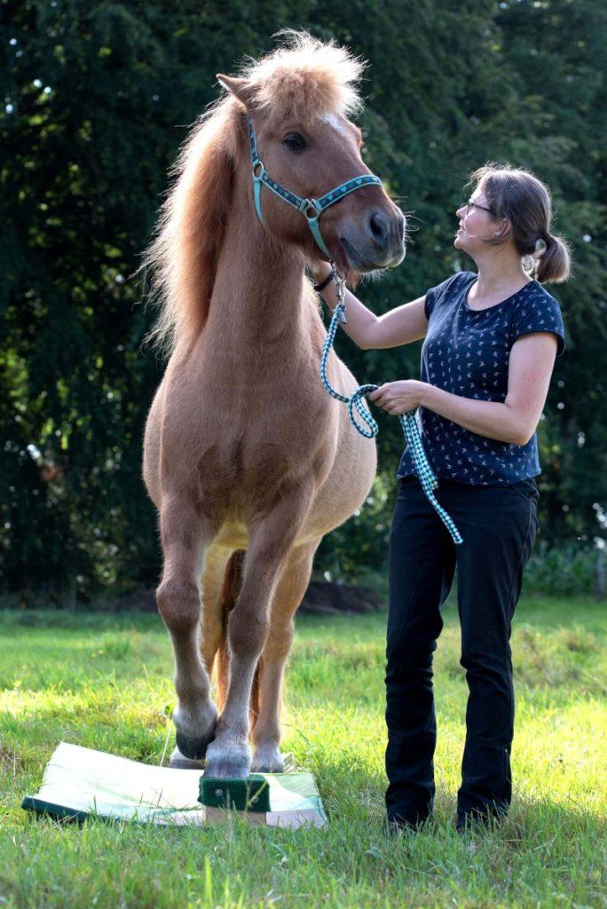 Pferd mit einem guten Körpergefühl und Spaß beim Training