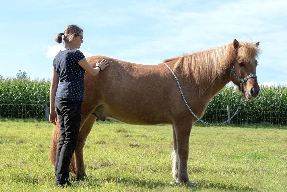 Pferdeergotherapeutische-Behandlung