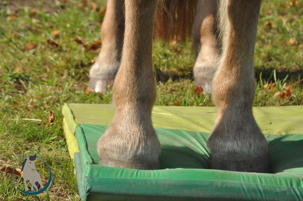 Pferdetraining mit Plufsig und instabilen Untergründen