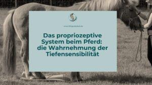 Das propriozeptive System beim Pferd die Wahrnehmung der Tiefensensibilität