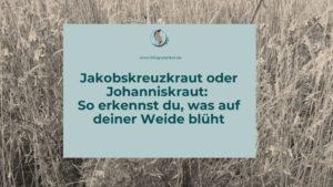 Jakobskreuzkraut oder Johanniskraut Unterschied erkennen