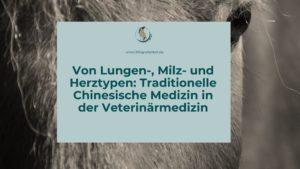 Traditionelle Chinesische Medizin bei Pferden