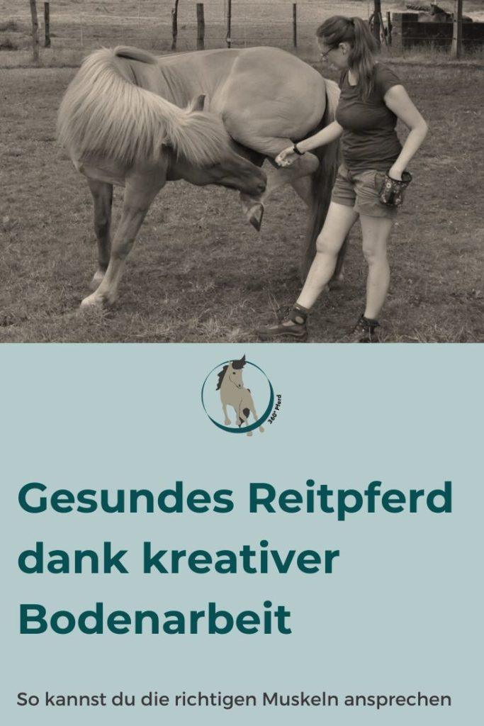Mit kreativer Bodenarbeit kannst du die tiefen Muskeln deines Pferdes ansprechen, die vor allem eine Stütz- und Haltefunktion haben und die Wirbelsäule stabilisieren