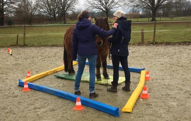 Selbsterfahrung beim propriozeptiven Pferdetraining