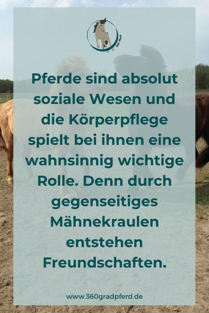 Pferde sind soziale Wesen und brauchen andere Pferde. Bei der gemeinsamen Körperpflege entstehen Freundschaften