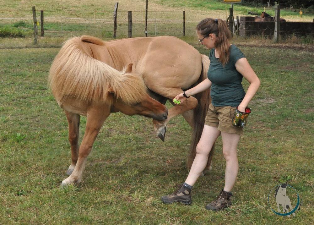 Clickertraining mit Pferd