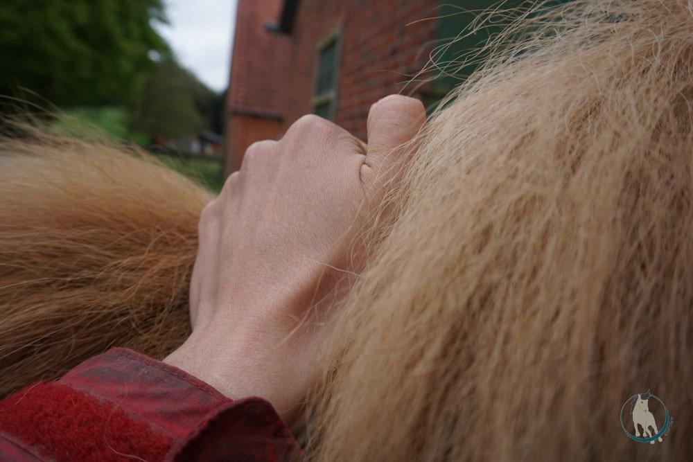 Drückungen am Mähnenkamm als Massagetechnik fürs Pferd