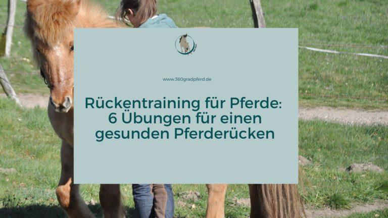 Rückentraining für Pferde Übungen für einen starken Pferderücken