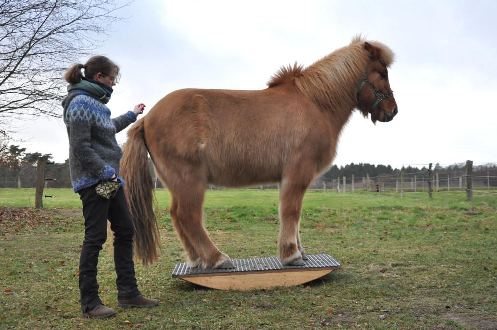 Pferdewippentraining zur Stärkung der Bauch- Rückenmuskulatur
