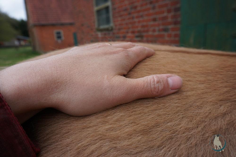 Vibration mit der Hand als Massagetechnik fürs Pferd