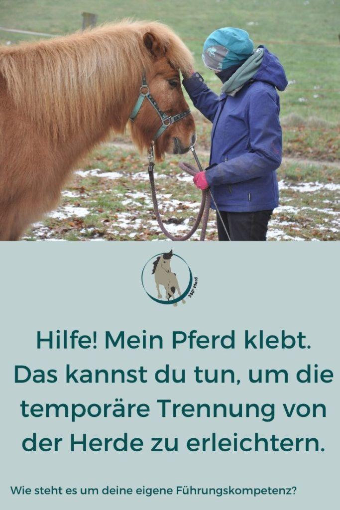 Hilfe, mein Pferd klebt: Wie die Arbeit an dir selbst deinem Pferd die Trennung von seiner Herde erleichtern kann