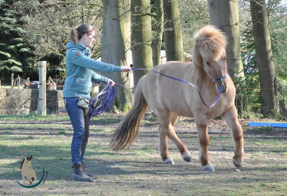 Gute oder schlechte Bewegung beim Pferd