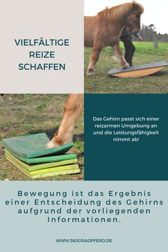 Vielfältige Reize verhelfen dem Pferd zu einer besseren Körperwahrnehmung