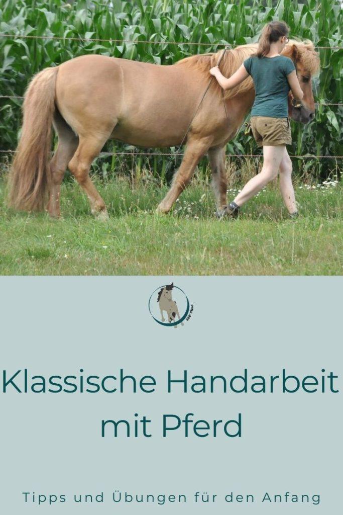 Handarbeit und Kurzzügelarbeit mit Pferd