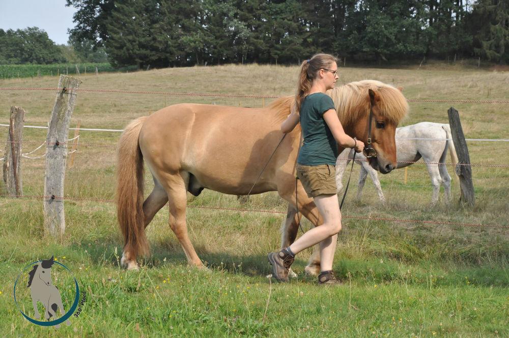 Das Genick des Pferdes als höchster Punkt