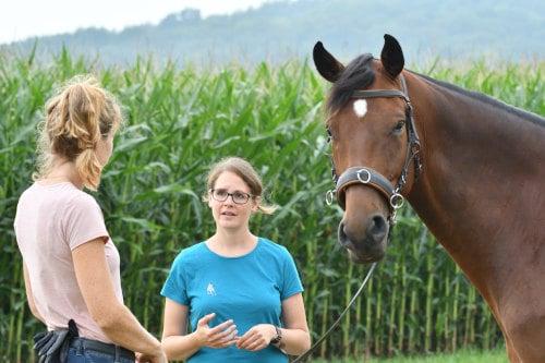 Unterricht und Kurse mit 360° Pferd