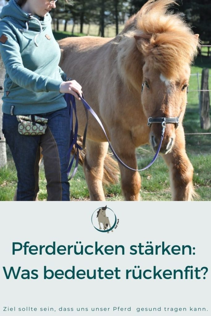 Bedeutung rückenfittes Pferd