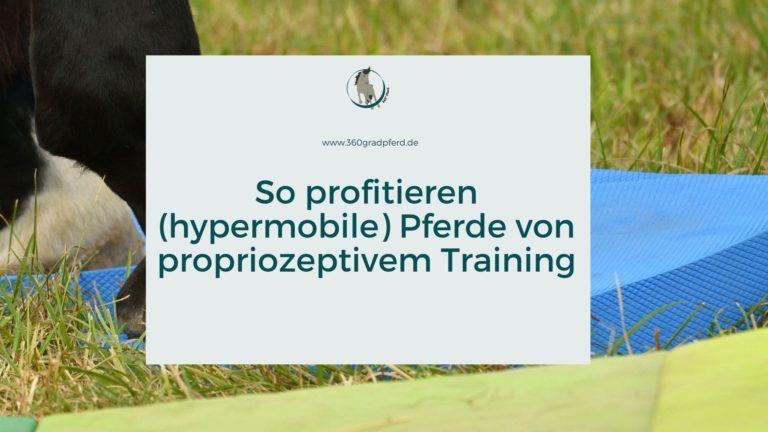 So profitieren hypermobile Pferde von propriozeptivem Training