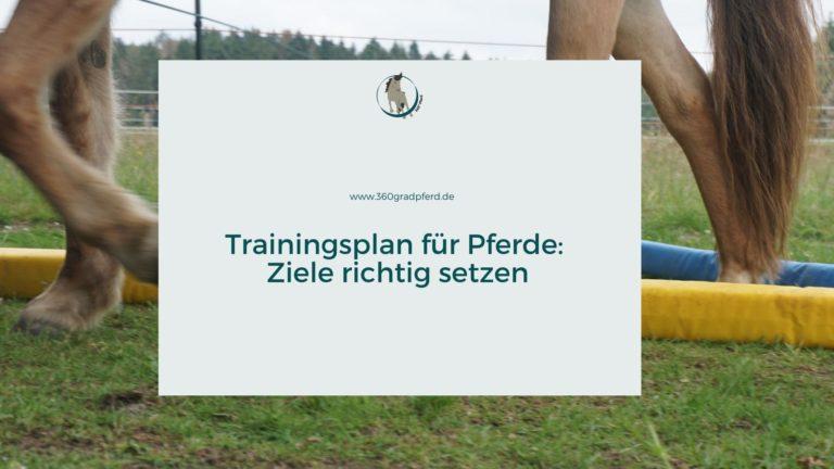 Trainingsplan für Pferde gestalten