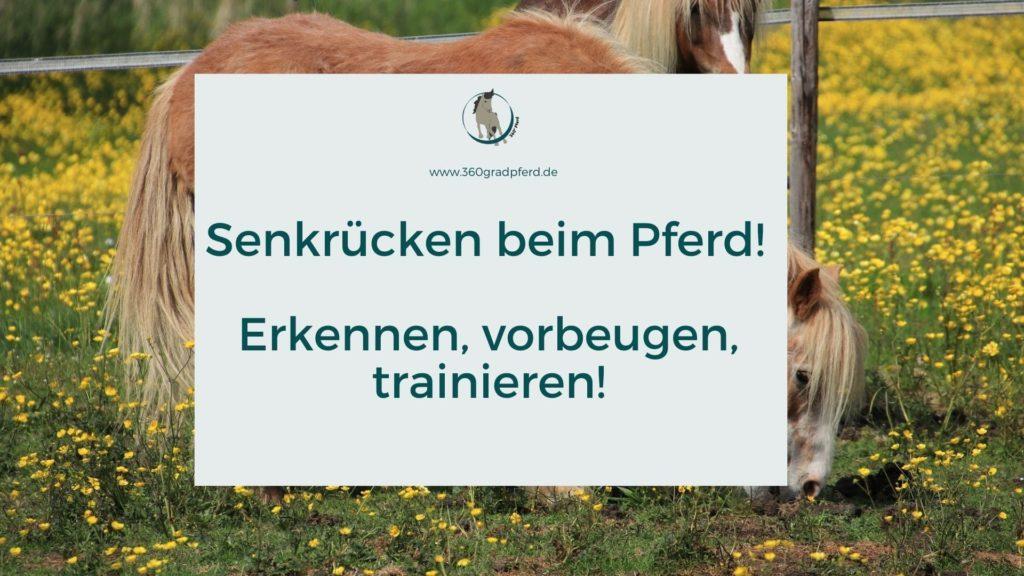 Senkrücken beim Pferd erkennen und trainieren