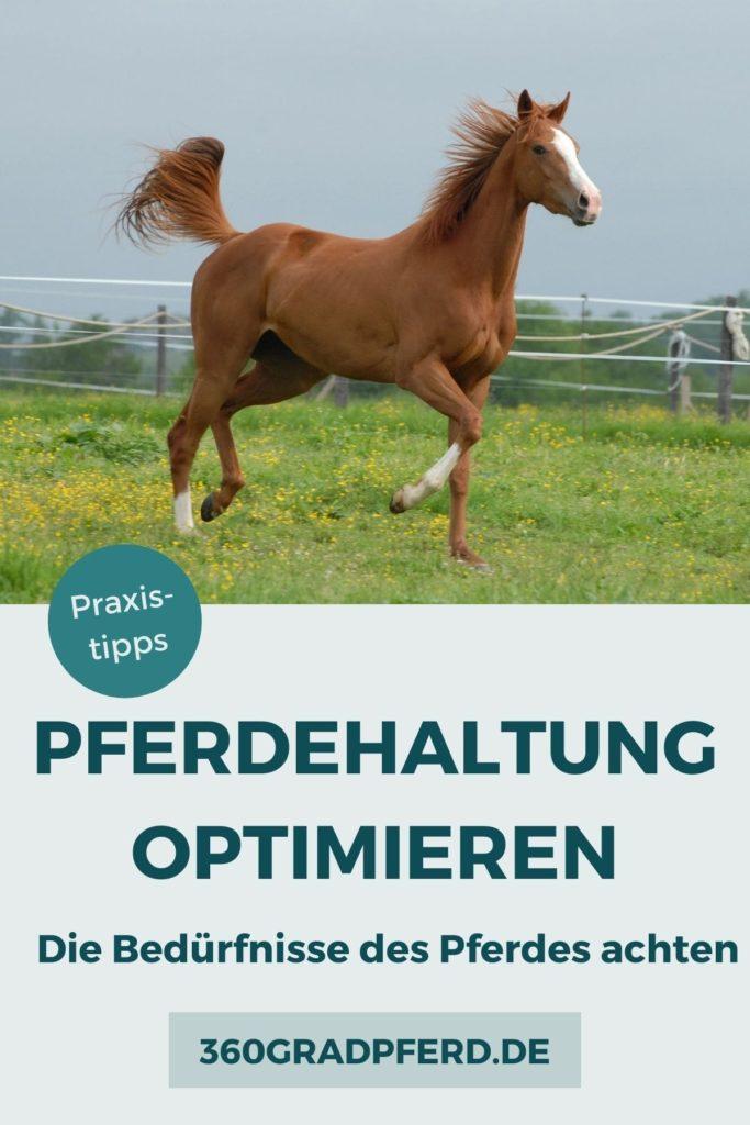 Artgerechte Pferdehaltung heißt die Bedürfnisse des Pferdes zu achten