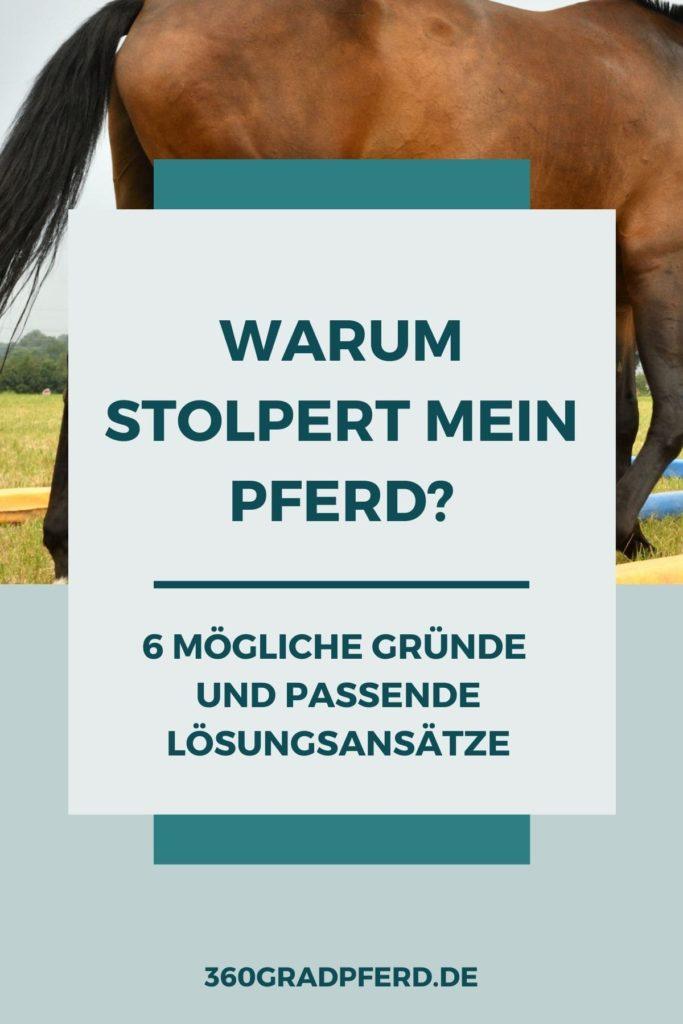 Warum stolpert mein Pferd und was kann ich tun? 6 Gründe und mögliche Lösungsansätze