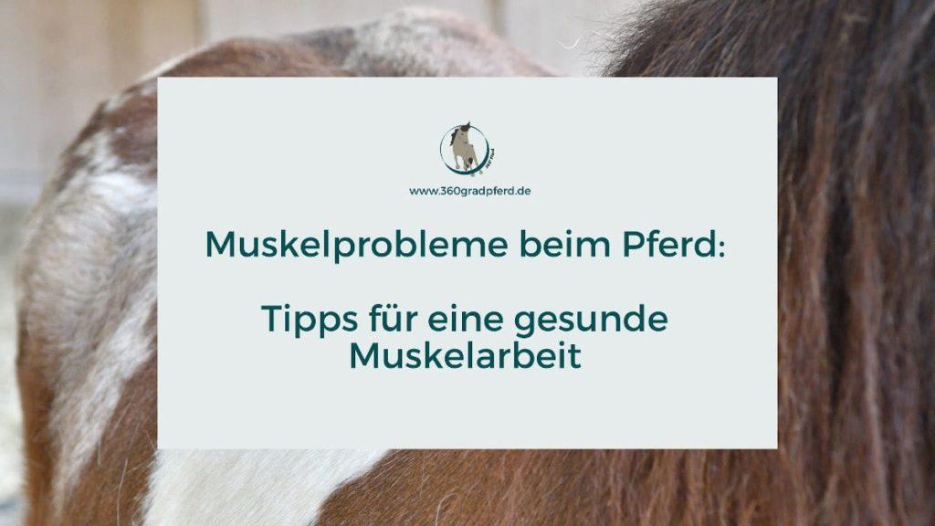 Muskelprobleme beim Pferd Tipps für gesunde Muskelarbeit