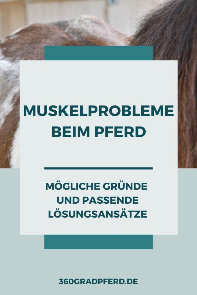 Muskelprobleme beim Pferd: Mögliche Gründe und passende Lösungsansätze