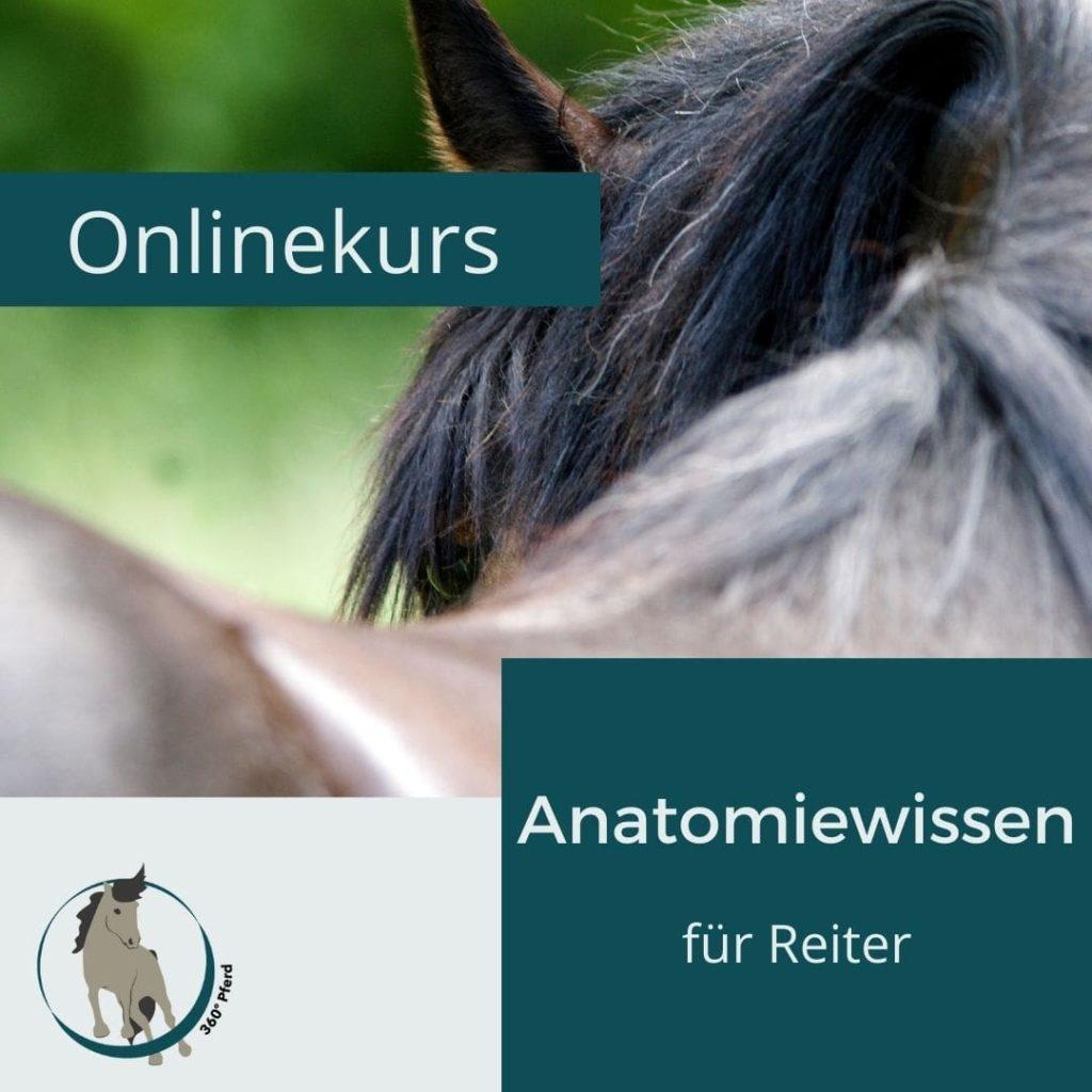 Onlinekurs Anatomiewissen für Reiter