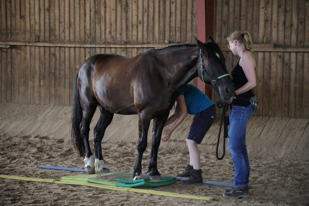 Propriozeptive Wahrnehmung Pferd verbessern